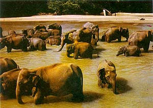 elephant-bathing.jpg